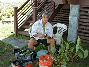 Neighbor George Kahumoku Jr. Helping Harvest Taro, August 20, 2010