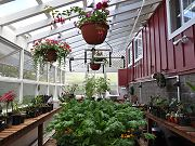Greenhouse with Plants, May 10, 2010