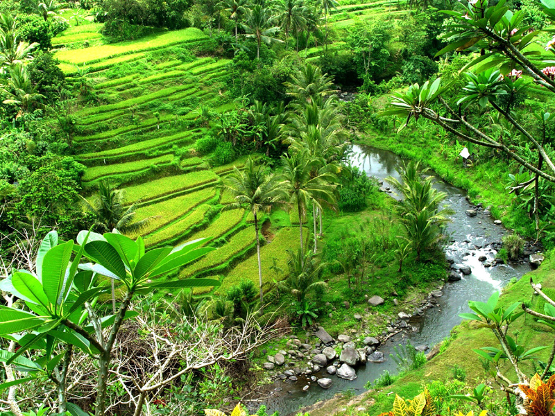 Inspiration for Terraced Rock Walls, Sayan, Bali